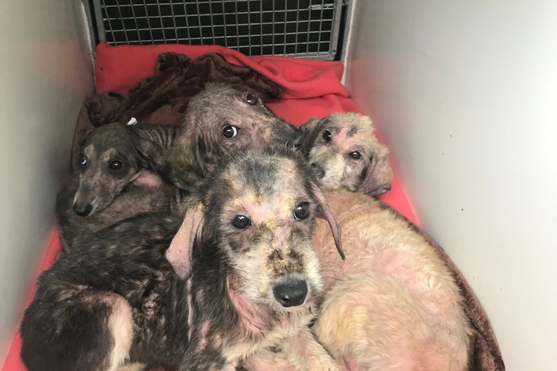 Four adorable dogs rescued after puppies dumped in plastic bag next to river
